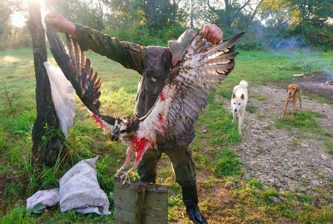 На Ивано-Франковщине смертельно ранили птицу из Красной книги Украины, прилетевшую из Финляндии [фото]